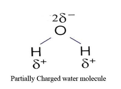 solvent properties of water